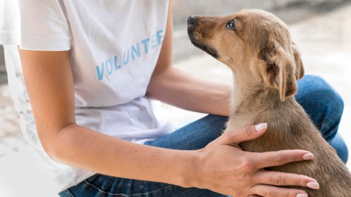 Animal Rescue Shelters in Karachi